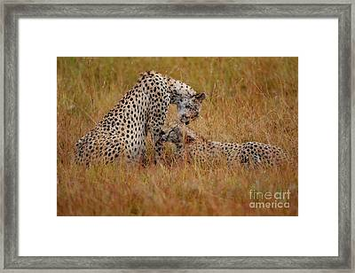 Best Of Friends Framed Print by Nichola Denny