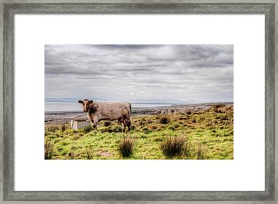 Besty My Irish Cow Framed Print by Natasha Bishop