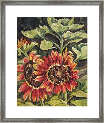 Betsy's Sunflowers Framed Print by Cheryl Pass
