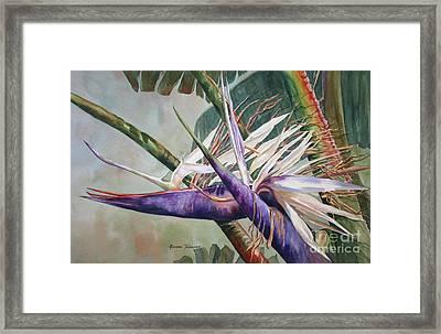 Betty's Bird - Bird Of Paradise Framed Print by Roxanne Tobaison