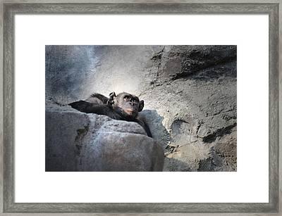 Between Framed Print by Dan Holm