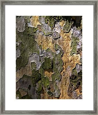 Framed Print featuring the photograph Between Light And Shadow by Lynda Lehmann