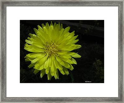 Between Orange And Green Framed Print by Greg Patzer