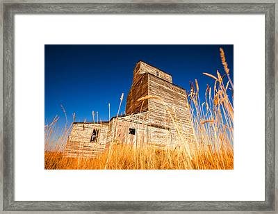 Between The Blades Of Grass Framed Print by Todd Klassy