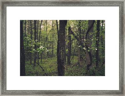 Between The Dogwoods Framed Print