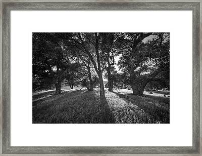 Between The Oaks Framed Print