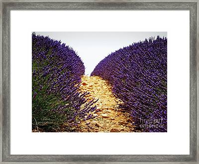 Between The Purple Framed Print