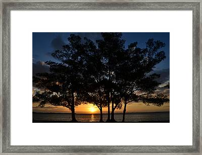 Framed Print featuring the photograph Between The Trees by Melanie Moraga