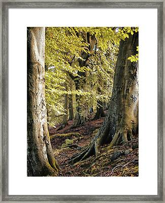 Between Trees Framed Print by Philip Openshaw