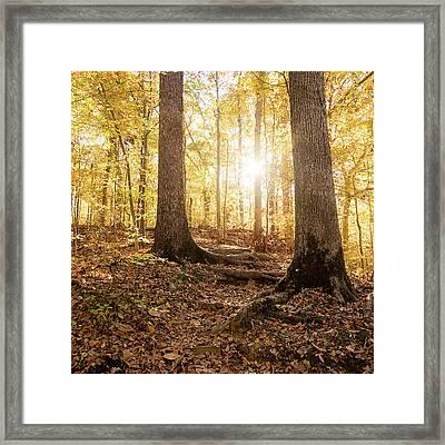 Between Two Trees Framed Print by Jon Woodhams