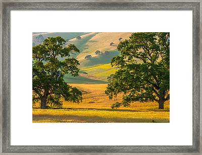 Between Two Trees Framed Print