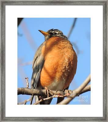Beverly Hills Birdie Framed Print
