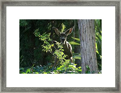 Beverly Hills Deer Framed Print by Marna Edwards Flavell