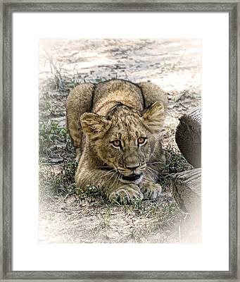 Framed Print featuring the photograph Beware by Cheri McEachin