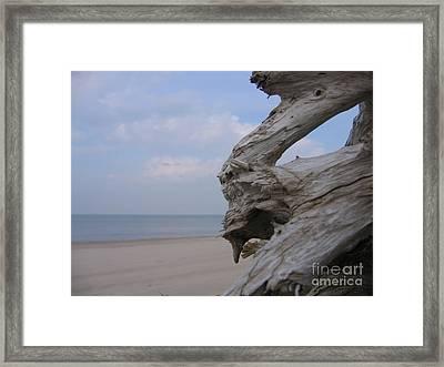 Framed Print featuring the photograph Driftwood by Maciek Froncisz