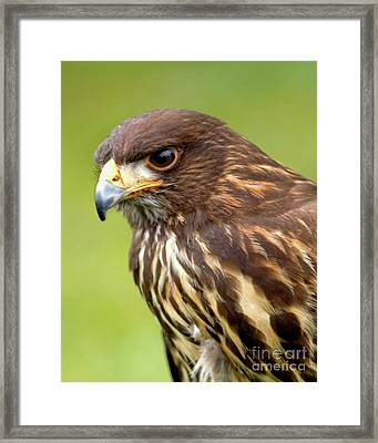 Beware The Predator Framed Print by Stephen Melia