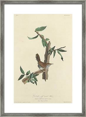 Bewick's Long-tailed Wren Framed Print by Rob Dreyer