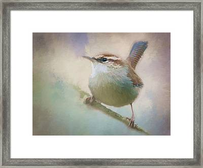 Bewicks Wren - 365-131 Framed Print by Inge Riis McDonald