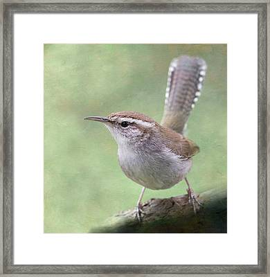 Bewick's Wren Framed Print by Angie Vogel