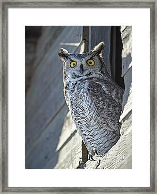 Bewildered.. Framed Print by Nina Stavlund