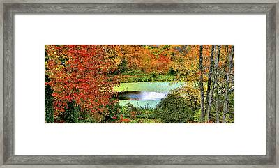 Beyond The Birch Pathway Framed Print