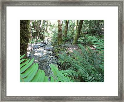 Framed Print featuring the photograph Beyond The Ferns by Marie Neder