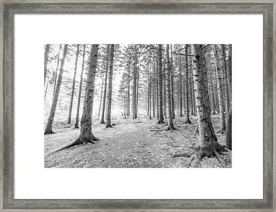 Beyond The Pines Framed Print by Everet Regal