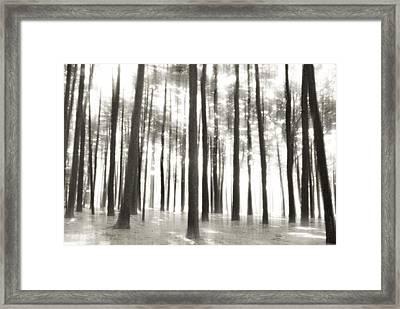 Beyond The Trees - Ocean County Park Framed Print