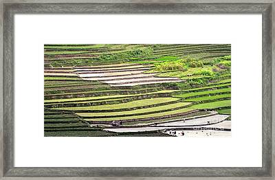 Bhutan Agricultural Farms A Buddhist Monarchy  Posters Landmark Photography Canvas Greeting Cards  Framed Print by Navin Joshi