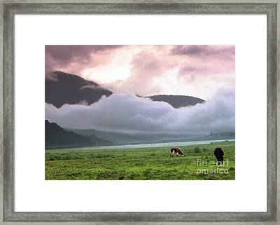 Bhutan Landscape Cows Grazing Mountains Clouds  Framed Print by Navin Joshi