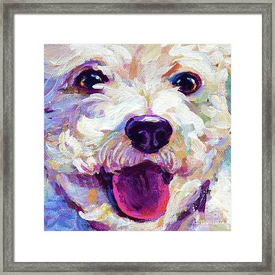 Bichon Frise Face Framed Print by Robert Phelps