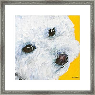 Bichon Frise Framed Print by Melissa Smith