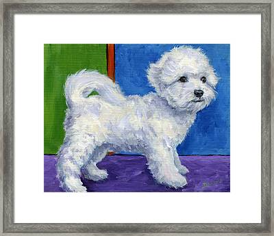 Bichon Frise Standing Sideways Framed Print by Dottie Dracos