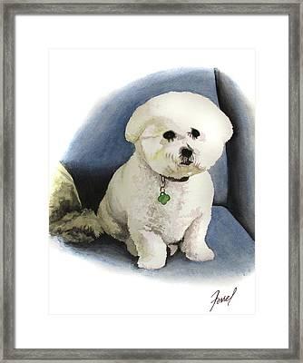 Bichon Sonny Framed Print by Ferrel Cordle