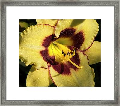 Bicolored Lily Framed Print by Jean Noren