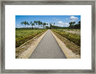 Bicycle Track Passing Through The Landes Forest Framed Print by Sami Sarkis