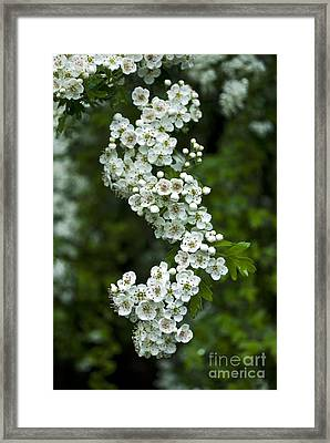 Bidwell Park Bouquet Framed Print by Richard Verkuyl
