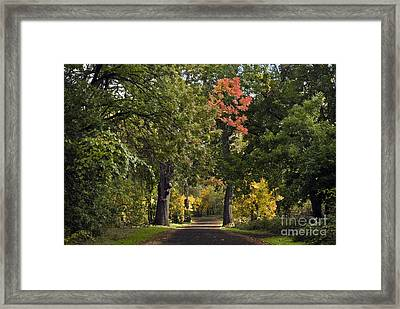 Bidwell Park By One Mile Framed Print