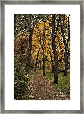 Bidwell Park Fall Framed Print