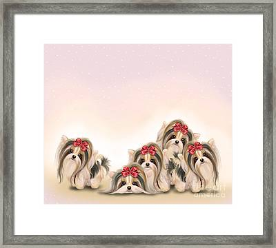 Biewer Pack Framed Print