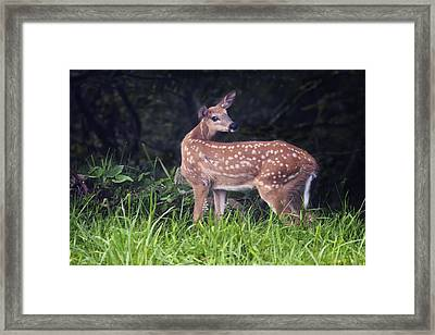 Big Bambi Framed Print