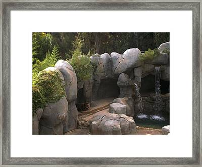Big Bear Framed Print by Guillermo Mason