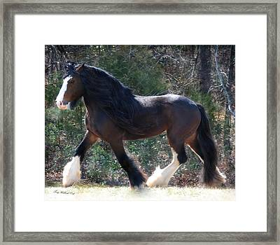 Big Beautiful Paul Framed Print