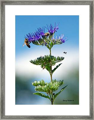 Big Bees Little Bee Framed Print