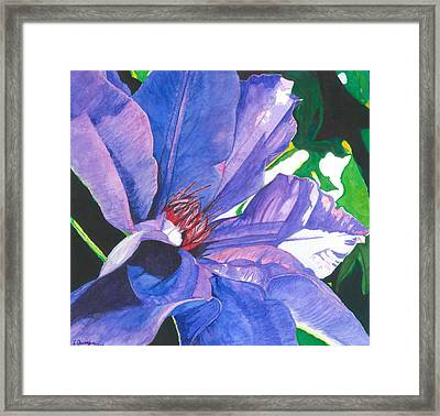 Big Blue Clematis Framed Print by Leslie Gustafson