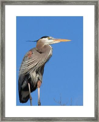 Framed Print featuring the photograph Big Blue Facing The Wind by Jeanne Kay Juhos