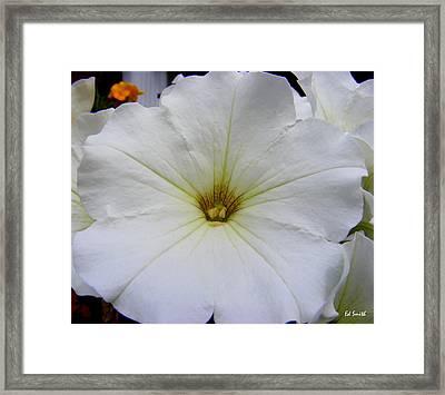 Big Bold Beautiful Framed Print