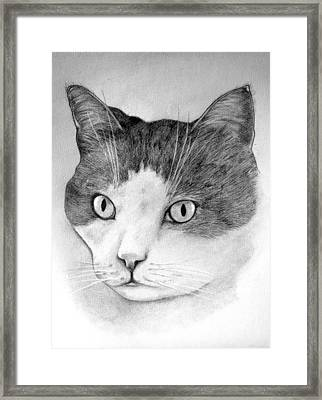 Framed Print featuring the drawing Big Boy Baily by John Stuart Webbstock