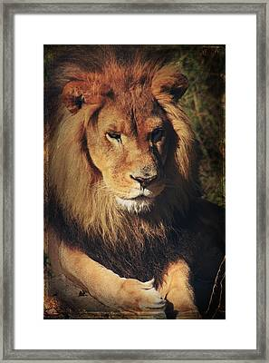 Big Boy Framed Print by Laurie Search