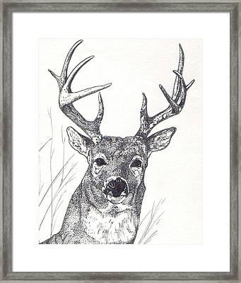 Big Buck Framed Print by Debra Sandstrom